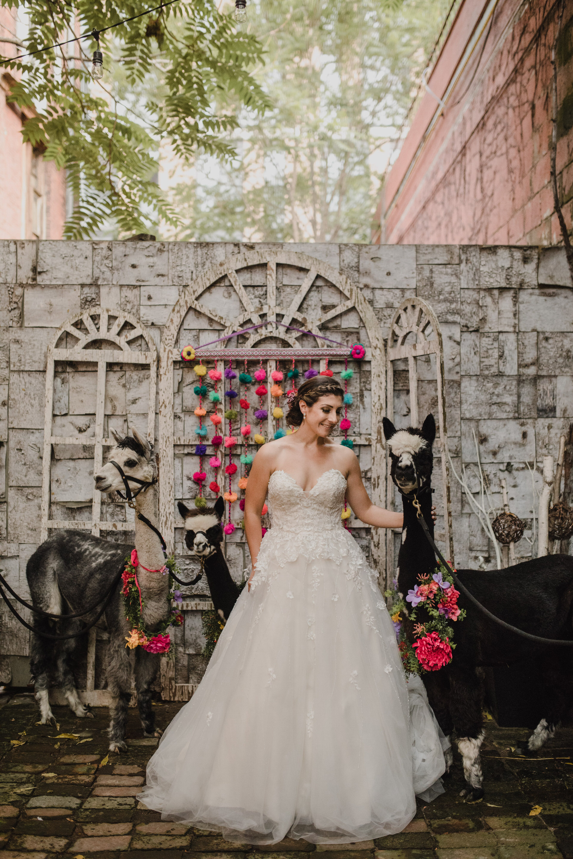 Berkeley Church Wedding - bride with llamas