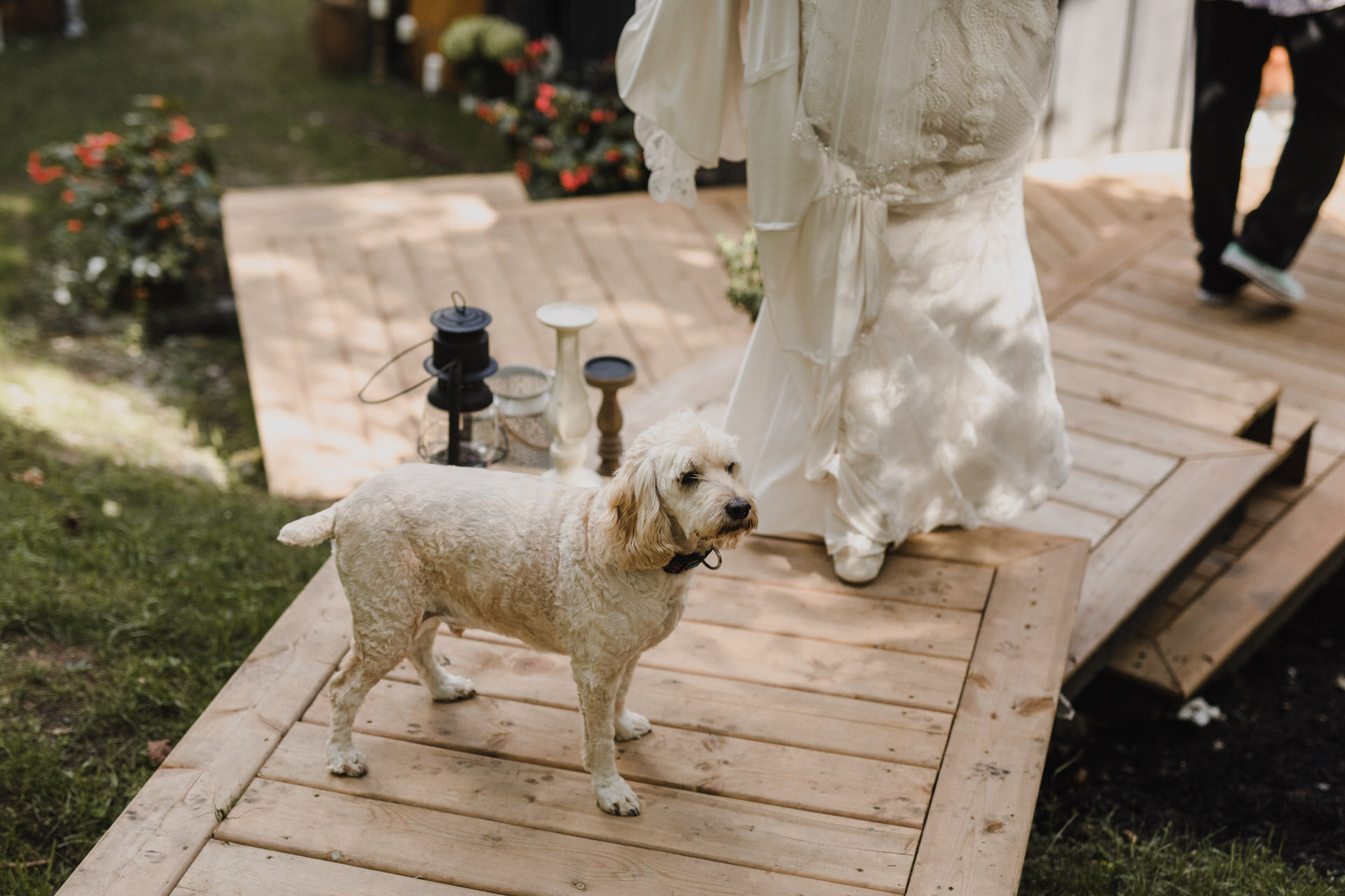 Muskoka Wedding - dog friendly wedding