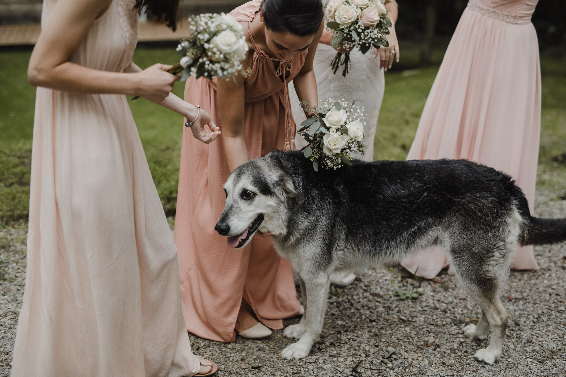 Muskoka Wedding - puppy love