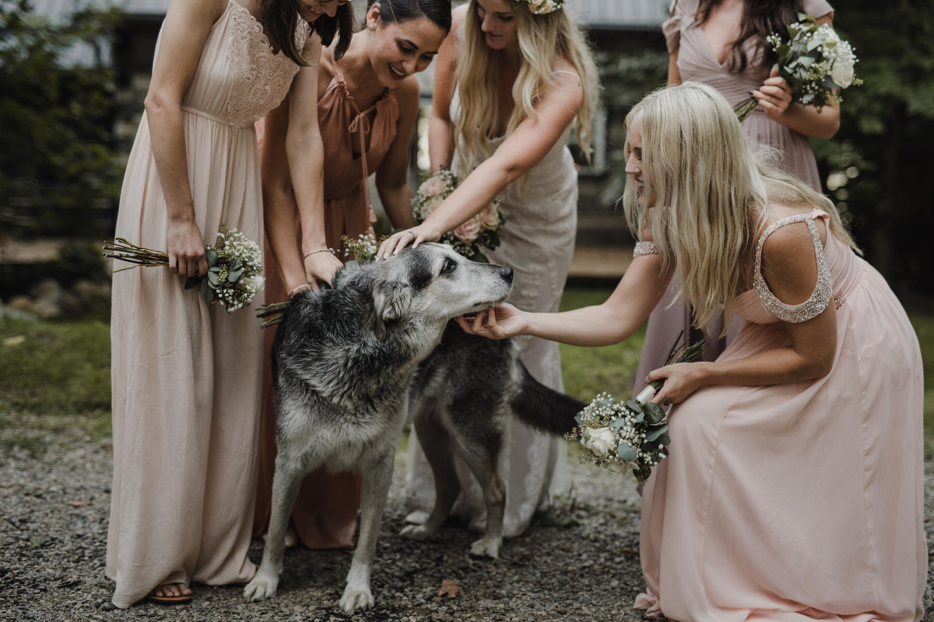 Muskoka Wedding - doggo